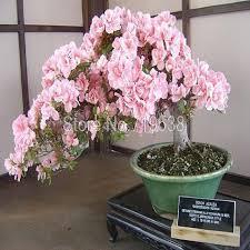 online get cheap planting winter flowers aliexpress com alibaba