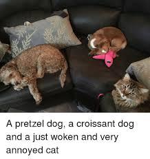 Annoyed Dog Meme - 25 best memes about croissant dog croissant dog memes