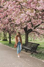 the best cherry blossoms in london five five fabulous