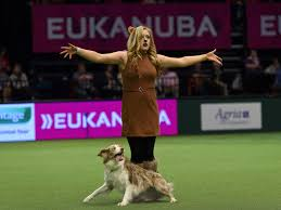 boxer dog crufts 2014 crufts best in show is a must watch spectacle the independent