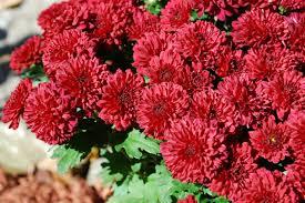 good flowers names u2013 thin blog