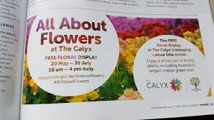 All About Flowers - all about flowers