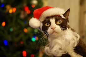 cat christmas santa spotted christmas cat 3