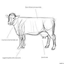 how to draw a cow in photoshop cow forget and shapes