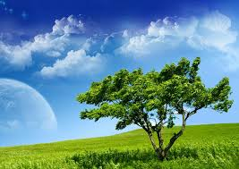 green tree hd wallpaper 950697