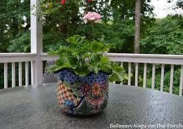 Outdoor Potted Plants Full Sun by Kimberly Queen The Shed Free Fern