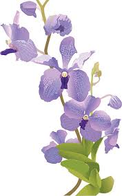 Purple Orchids Purple Orchid Clip Art Vector Images U0026 Illustrations Istock