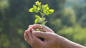 pay school fee by planting a tree a great initiative