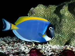 freshwater fish best wallpaper 18354 baltana