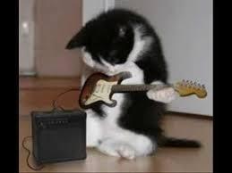 imagenes chistosas y tiernas fotos de gatos tiernos y chistosos y smileys youtube