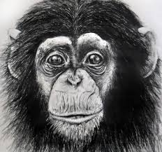 realistic monkey drawing sketch realistic monkey face bow tie