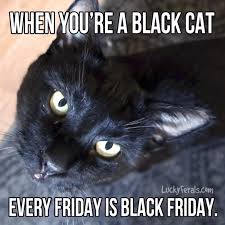 Friday Cat Meme - when you re a black cat every friday is black friday lucky ferals