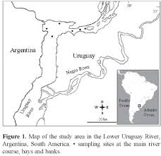 Parana River Map Ultraestructura Externa De Manayunkia Speciosa Fabriciidae Del