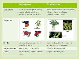 plant life 4thq unit ppt video online download