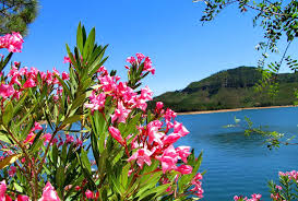 beautiful flower images flowers nice shore freshness flowers trees lovely mountain pink