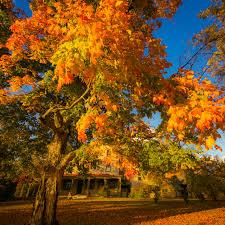 golden orange color fall foliage the best of batsto village in autumn u2014 greg molyneux