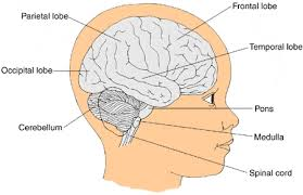 Which Part Of The Brain Consists Of Two Hemispheres Brain Tumors Children U0027s Hospital Of Wisconsin