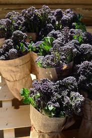vegetable garden great dixter
