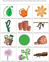 plants theme and activities educatall