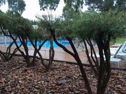 Voyages Desert Gardens Hotel Ayers Rock by Best Price On Outback Pioneer Lodge In Ayers Rock Uluru Reviews