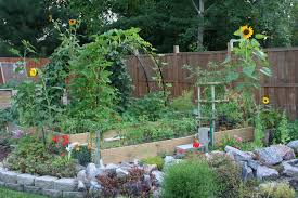 fruits and vegetables my northern garden amy archway