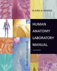 Human Anatomy And Physiology Lab Manual Marieb Human Anatomy Laboratory Manual With Cat Dissections By Elaine N