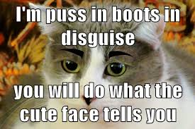 Puss In Boots Meme - lolcats puss in boots lol at funny cat memes funny cat