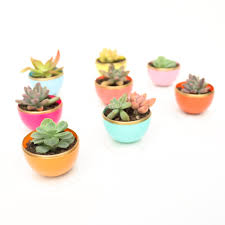 Succulent Planters For Sale by A Kailo Chic Life Craft It Diy Mini Spring Succulent Planters
