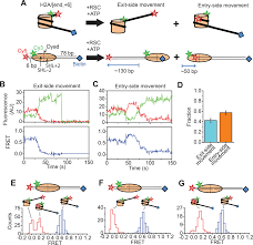 stepwise nucleosome translocation by rsc remodeling complexes elife