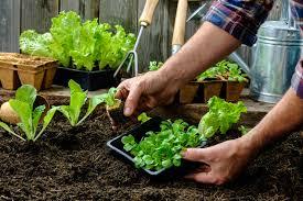 indoor vegetable gardening for beginners gardening ideas