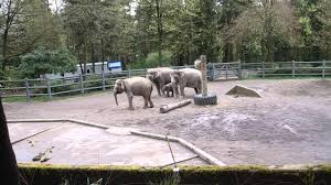 elephant behavior at the oregon zoo with baby lily youtube