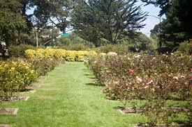 Botanical Gardens Golden Gate Park by Golden Gate Park Rose Garden Arborcide U2013 See The Destruction From