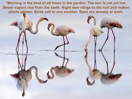 birds quotes fascinating birds quotes bird quotes bird quotations