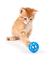 all about cat toys best toys for cats