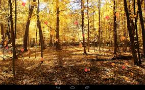 fall pumpkin wallpaper autumn wallpaper android apps on google play