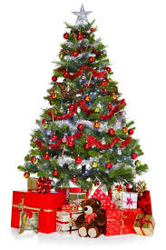 we show you how to keep your christmas tree looking fresh u2014 plus