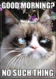 Good Morning Cat Meme - 2 1 2 x 3 1 2 grumpy cat good morning no such thing refrigerator