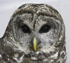 owls of new york