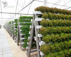 creative of best plants for hydroponics hydroponic gardening