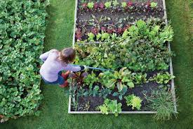 how to start a vegetable garden for beginners tips about vegetable gardening for beginners steps above view of