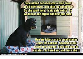 Lawyer Cat Meme - cat claimed her ancestors came overs on da mayflower and built