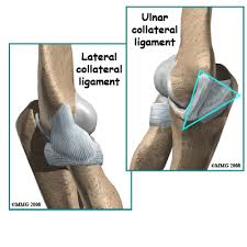 Collateral Ligaments Ankle Ulnar Collateral Ligament Ucl Injury Houston Methodist