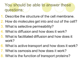 Cell Transport Skills Worksheet Answers Cell Membrane And Cell Transport Notes Ppt