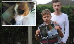 put dog to sleep family mourns pet dog mistakenly put during routine trip to