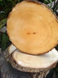 wood log vases irregular tree slices with bark 12 16in oval barking f c