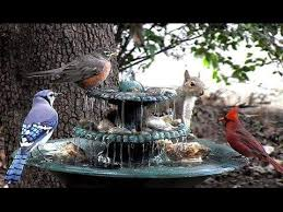 61 ornamental bird feeders and bird baths to amplify the of