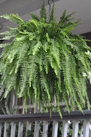 Faux Outdoor Bushes 186 Best Plantas Artificiales Images On Pinterest Artificial