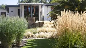 lovely and enchanting garden grasses ornamental grass