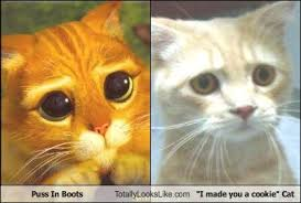 Puss In Boots Meme - puss in boots totally looks like i made you a cookie cat