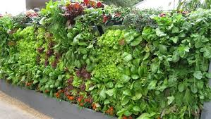 10 simple cheap home gardening innovations to set you on the path